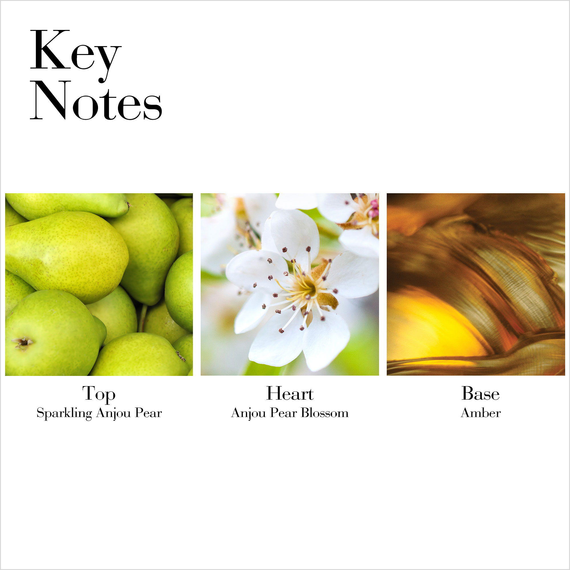 Key Notes- Top Sparkling Anjou Pear, Heart Anjou Pear Blossom, Base Amber