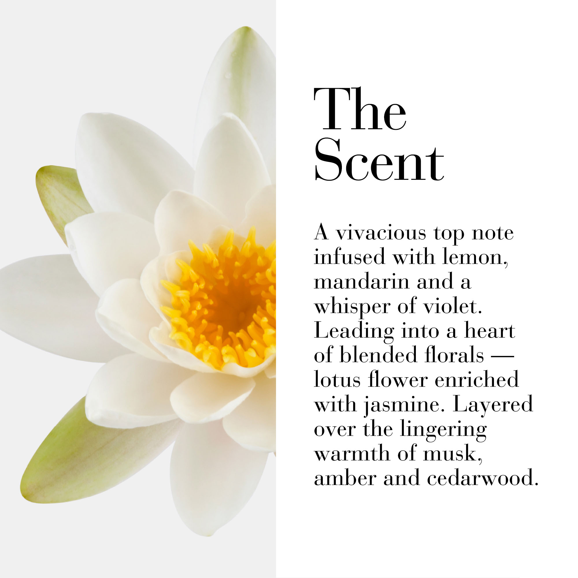The scent is a vivacious top note infused with lemon, mandarin and whisper of violet. Leading into a heart of blended florals-lotus flower enriched with jasmine. Layered over the lingering warmth of musk, amber and cedarwood.